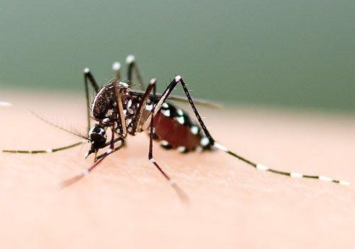 病媒蚊消毒